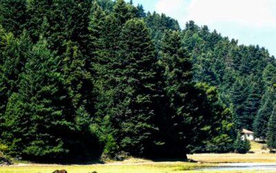 ΠΩΛΕΙΤΑΙ: Ξεκίνησαν οι πωλήσεις εκτάσεων σε Natura, μόλις ψηφίστηκε το Νομοσχέδιο Χατζηδάκη;