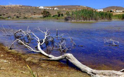 Καταδίκη της Ελλάδας από το Ευρωπαϊκό Δικαστήριο για ανεπαρκή προστασία της βιοποικιλότητας