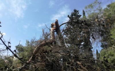 Προβλήματα και κίνδυνοι στο Άλσος Ευελπίδων
