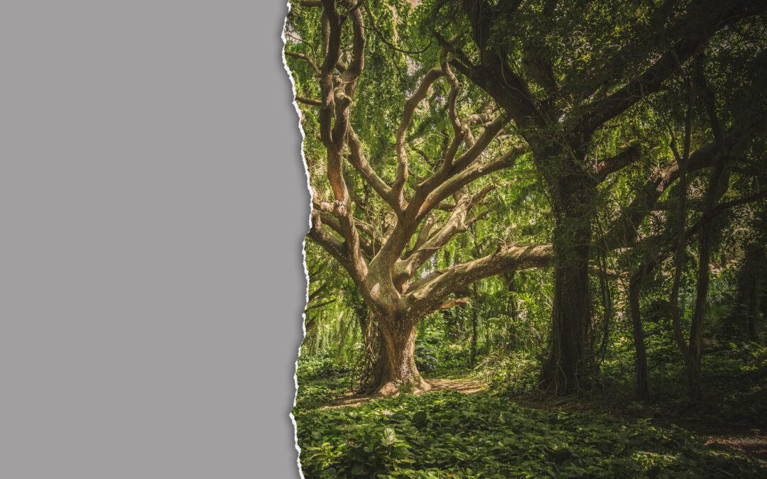 Περιβαλλοντικές οργανώσεις ζητούν απόσυρση απαράδεκτης διάταξης σε νομοσχέδιο Γεωργιάδη – Σκρέκα