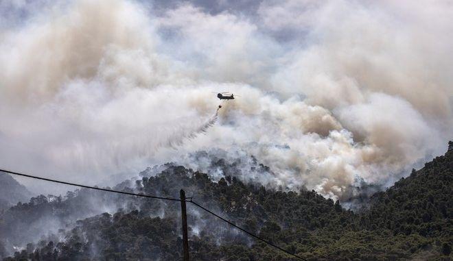 Πόσα δάση θα καούν ακόμη μέχρι να πάψουν οι καταστροφικές πυρκαγιές να αντιμετωπίζονται ως «ατυχία»;